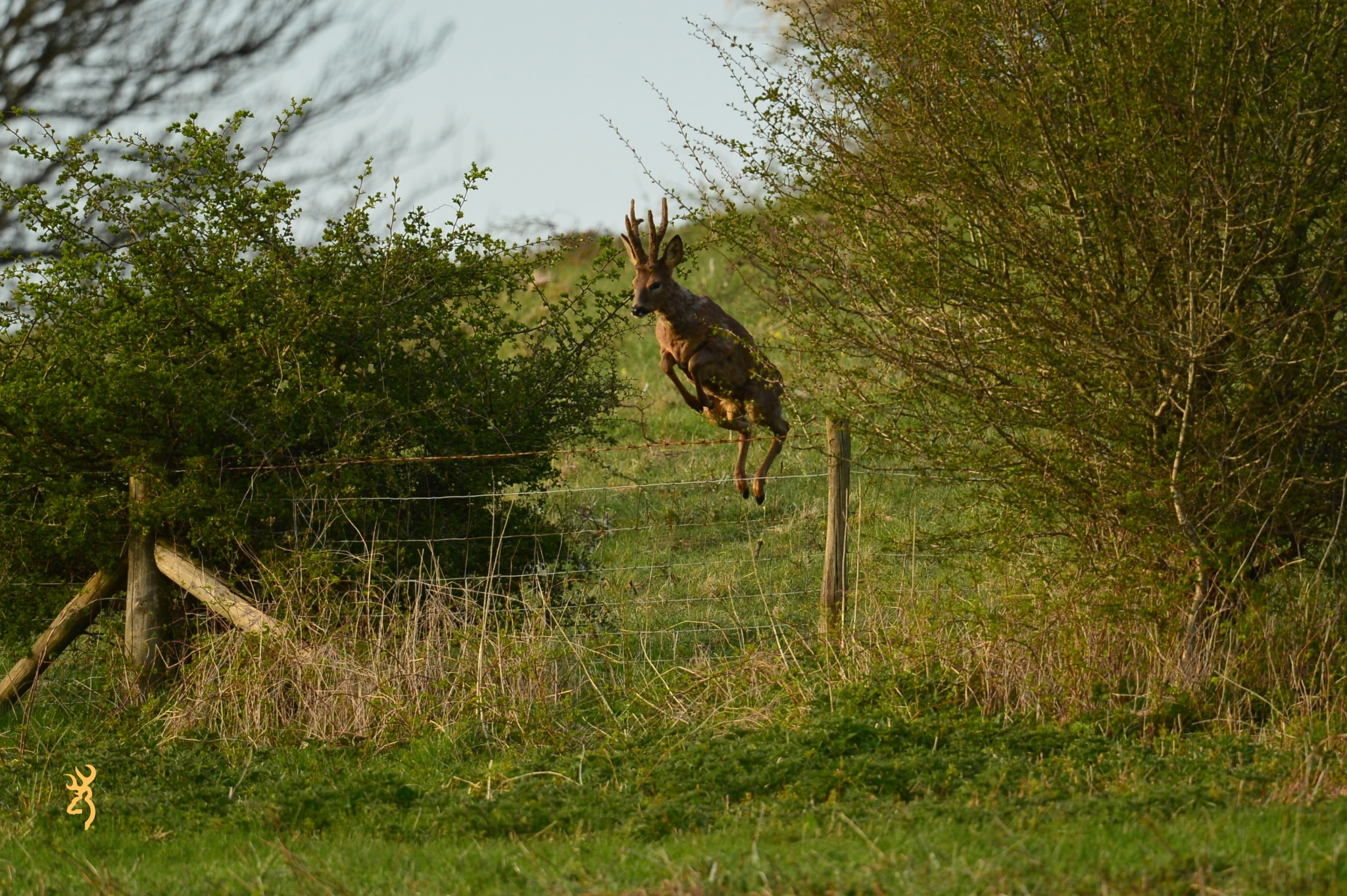 Bucks oncoming!