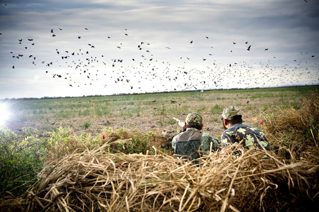 Wing Shooting in Argentina