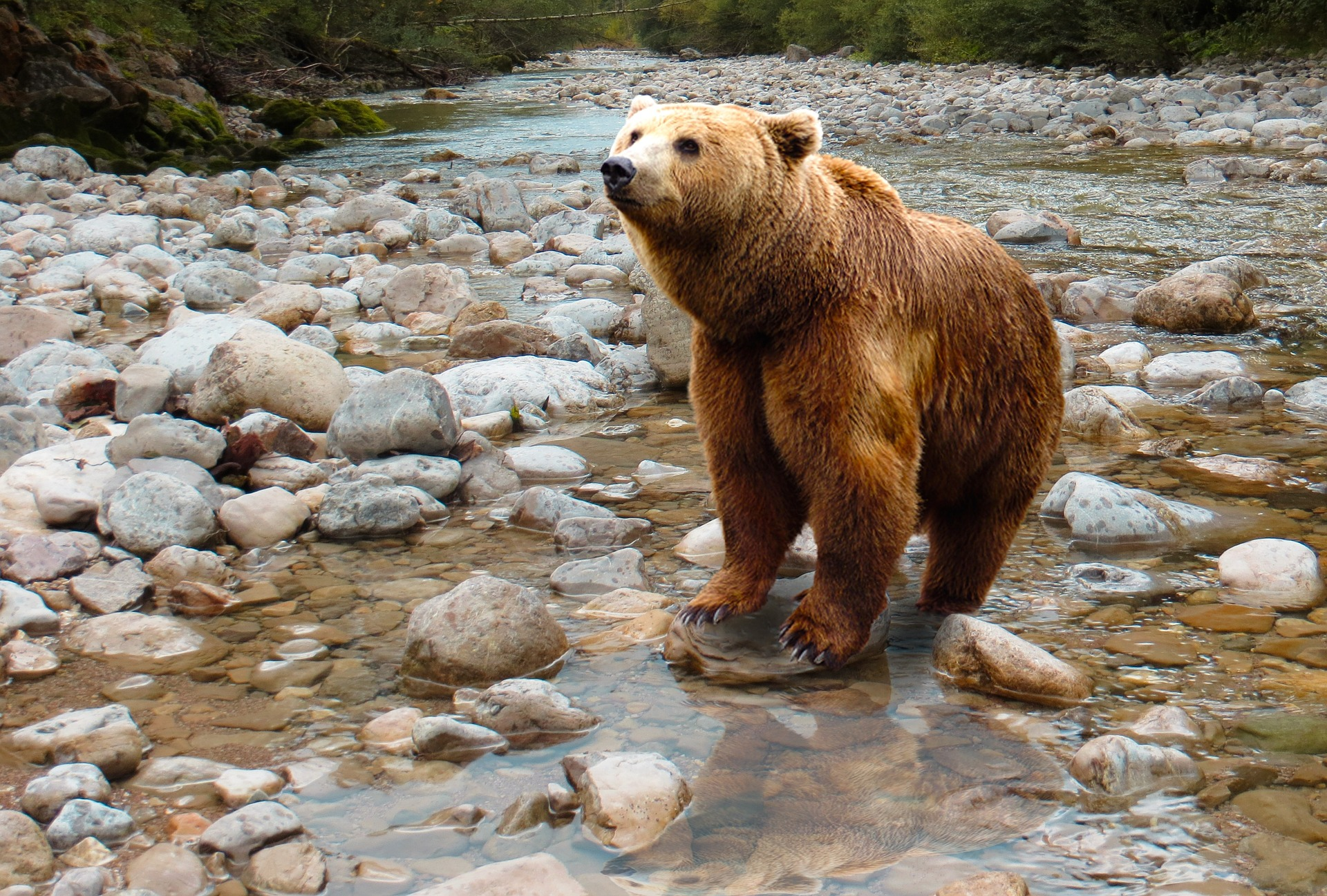 brg-voyage-chasse-ours-alaska