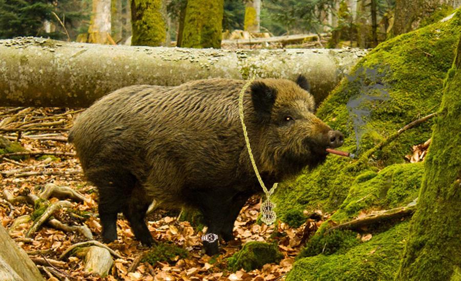 boar-1328949_1920