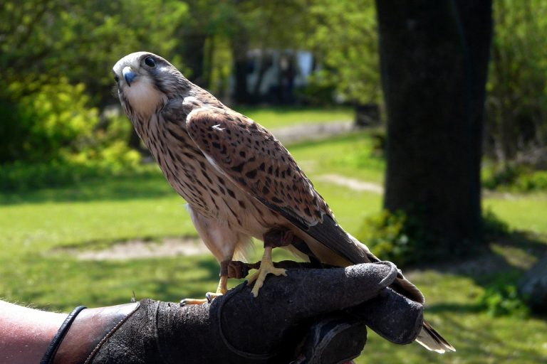 browning-blog-falconry2