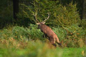 Browning Blog : Alexandra Hellstrom deer-hunting hungary