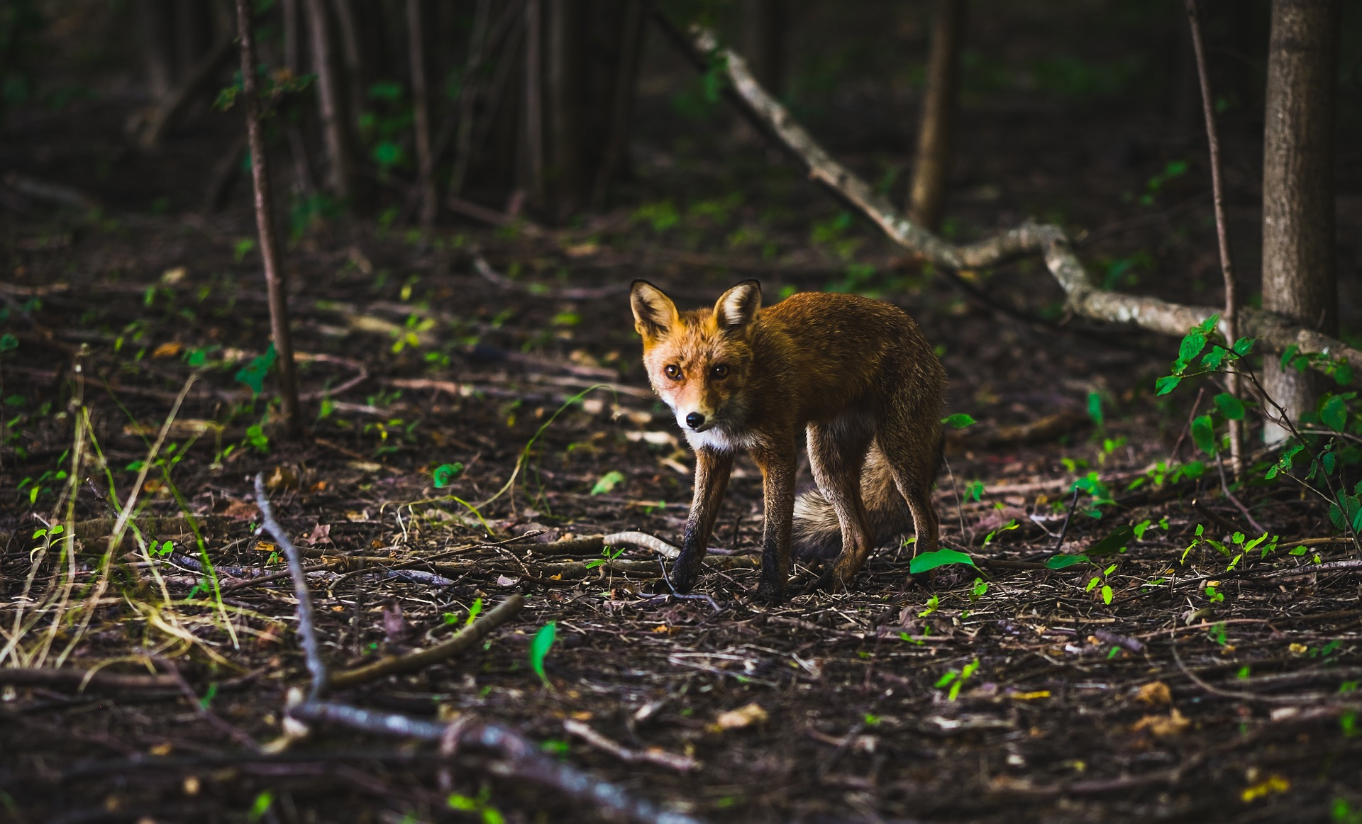 browning-blog-foxing-work-or-sport