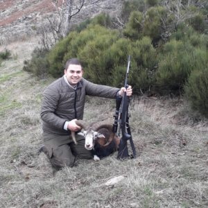 Browning Blog; The good, the bad and the mouflon